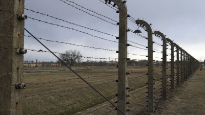 Barbered wire - Auschwitz facts in numbers